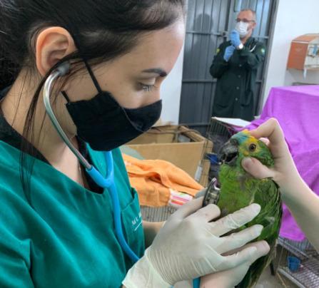 Papagaios resgatados após tempestade na região de Paranavaí são acolhidos por centro de apoio da Unicentro