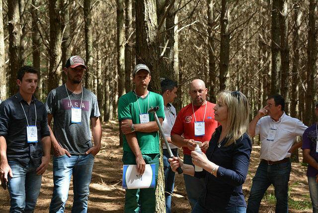 Detecção e controle das pragas do pinus é tema de palestra na Unicentro