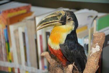 Animais taxidermizados estão em exposição no campus de Irati