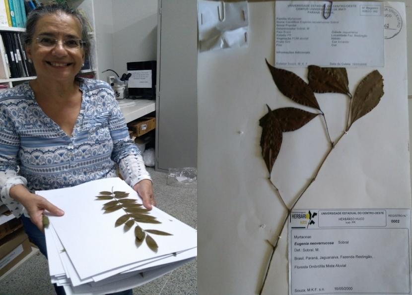 Herbário da Unicentro conta com milhares de amostras para consulta