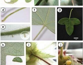 Pesquisadores da Unicentro descobrem nova espécie vegetal