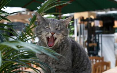 A importância da adoção de animais e um breve relato sobre uma gata