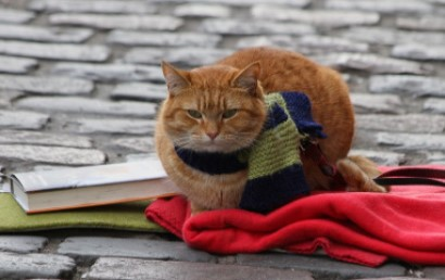 """Resenha de: """"Um gato de rua chamado Bob: A história de amizade entre um homem e seu gato"""""""
