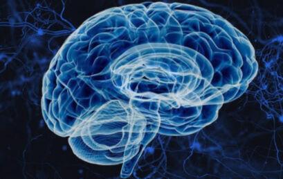 Por trás do cérebro