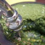 Preparo de chimarrão é tema de oficina na Feira Agroecológica