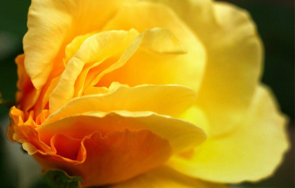 À flor da pele: mostra fotográfica pode ser conferida até essa quinta, 12